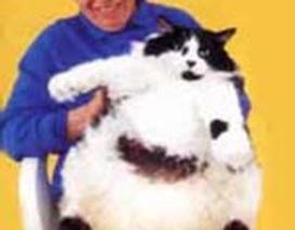 Chú mèo lớn nhất nước Anh