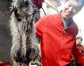 Chuột khổng lồ nặng gần 3 kg
