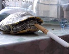 Chú rùa nghiện thuốc lá