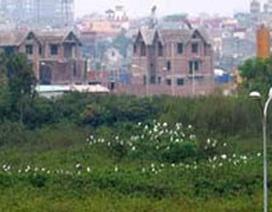 Đàn cò lớn xuất hiện ở Hà Nội