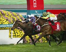 Hà Nội sẽ có trường đua ngựa ở Sóc Sơn