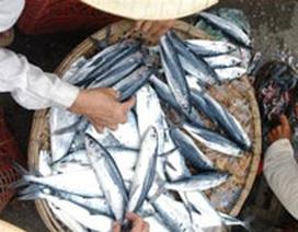 Đầy hóa chất cấm trong rau quả, thủy hải sản