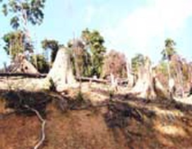"""Vụ phá rừng """"vô địch"""" ở Quảng Nam"""