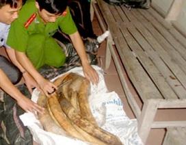 Bắt giữ 40 ngà voi đang vận chuyển sang Trung Quốc tiêu thụ