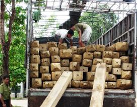 Bắt xe chở hơn 12 m3 gỗ lậu