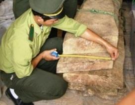 Kẻ gian đột nhập kho chứa của Hạt kiểm lâm trộm gỗ huê
