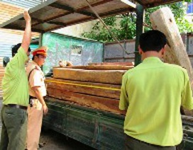 Giấu 25 hộp gỗ Cẩm Lai quý hiếm dưới cây cảnh
