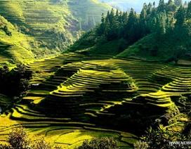 Ngỡ ngàng trước vẻ đẹp bức tranh đồng quê Trung Quốc