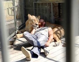 Sống chung với sư tử 365 ngày