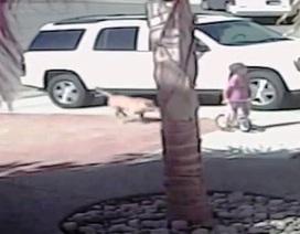 Cậu bé bị chó tấn công… được mèo cứu
