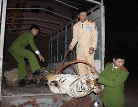 Phát hiện xác hổ 120kg trên xe tải