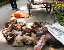 Bắt đối tượng vận chuyển 3 cá thể khỉ  bị thương đi tiêu thụ