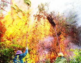 Huy động 700 người dập đám cháy rừng