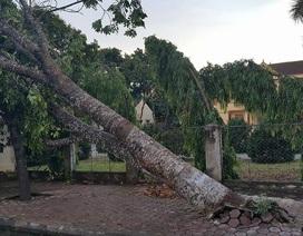 Lốc xoáy quét qua Nghệ An phá đổ cây, hỏng nhà