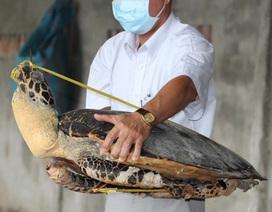 """Triệt phá """"đại"""" trang trại giết hại rùa biển, ngâm tẩm hóa chất"""
