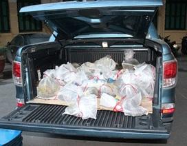 Bắt giữ ô tô dùng biển số giả vận chuyển gần 2 tạ Tê Tê Java