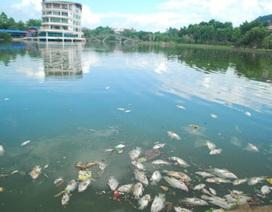 Cá chết nổi trắng mặt hồ công viên đẹp nhất thành phố Lào Cai