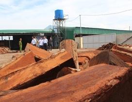 Phát hiện một xưởng tàng trữ hàng chục khối gỗ quý cấm khai thác