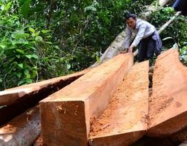 Chủ tịch xã bị đình chỉ công tác vì để mất rừng