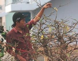 TPHCM tổ chức 68 điểm chợ hoa Tết Quý Tỵ