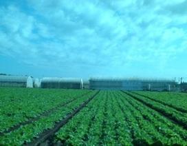 Công nghệ rau sạch ở xứ Phù Tang…