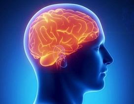 UniBrain – Dưỡng chất cho một trí tuệ minh mẫn