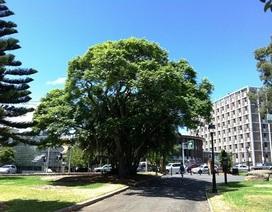 Sydney tặng 1.000 cây giống cho dân trồng khắp thành phố