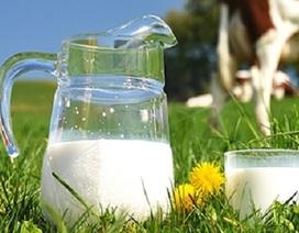Liên minh châu Âu dỡ bỏ hạn ngạch sữa