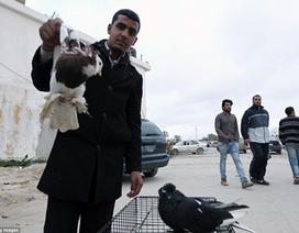 Dinh thự của Gaddafi bị biến thành chợ chim cảnh