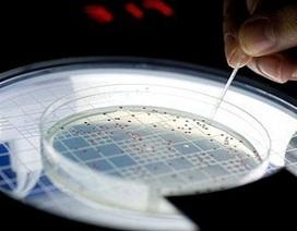 Hồi sinh vi khuẩn 500 triệu năm tuổi