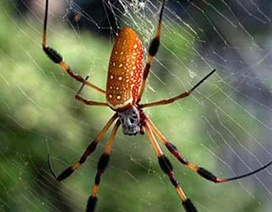 Tơ nhện dùng cho chip máy tính điện tử