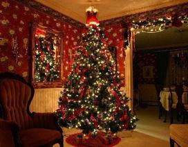 Cây thông Noel mang vào nhà bạn 25.000 côn trùng