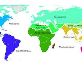 Bản đồ mới về phân bố động vật trên toàn cầu