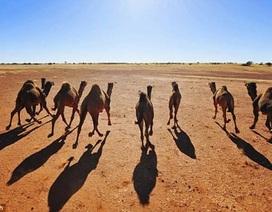 10 động vật sống ở nơi không ai ngờ tới