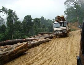 Thủy điện Mekong, phá rừng… sẽ làm mất mũi Cà Mau