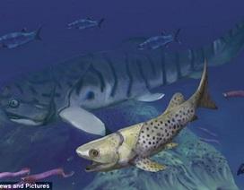Phát hiện loài cá cổ đại có cơ bụng