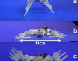 Robot được chế tạo từ công nghệ in 3D