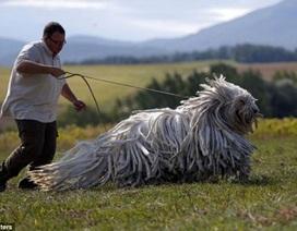 Chó cực lạ