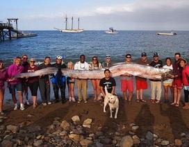 Bắt được cá mái chèo hiếm dài 5,4 mét tại Mỹ