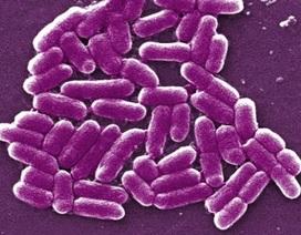 Sản xuất xăng từ vi khuẩn E.coli
