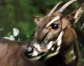 Báo Anh viết về động vật quý hiếm bậc nhất ở Việt Nam