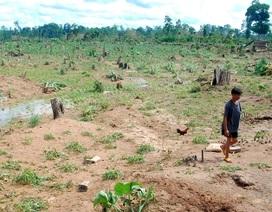 10 sự kiện môi trường nổi bật năm 2013