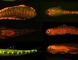 Nhiều loài động vật phát huỳnh quang