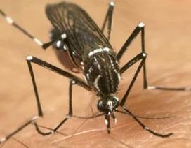 """Thử nghiệm """"muỗi cảm tử"""" chống sốt xuất huyết"""