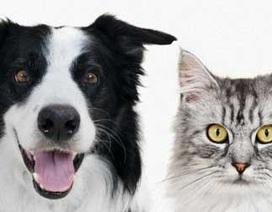 """Chó, mèo đều có """"giác quan thứ 6"""""""