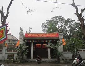 """9 cây di sản đầu tiên của Việt Nam """"kêu cứu"""""""