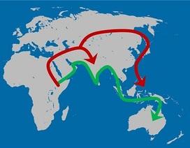 Loài người biết di cư sang lục địa khác cách đây 130.000 năm
