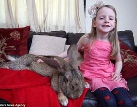 Con thỏ lớn nhất thế giới