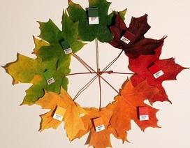 Tại sao lá chuyển màu vào mùa thu?