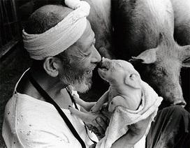 """Tại sao bộ ảnh """"hạnh phúc của một lão nông"""" gây sốt?"""